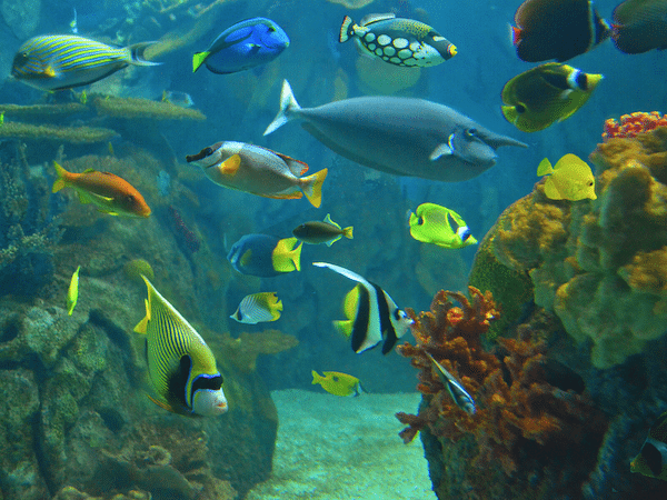 image of colorful reef fish