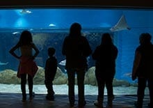 Image of family at Aquarium