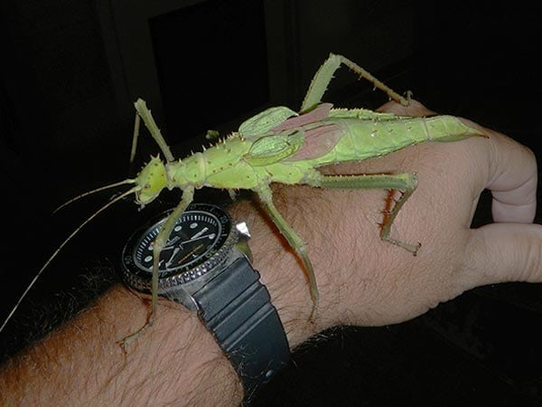image of a large insect resting on a human hand