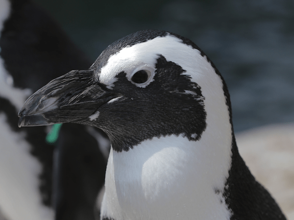 image of a penguin