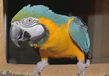 Image of a macaw