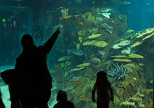 Image of family at the aquarium