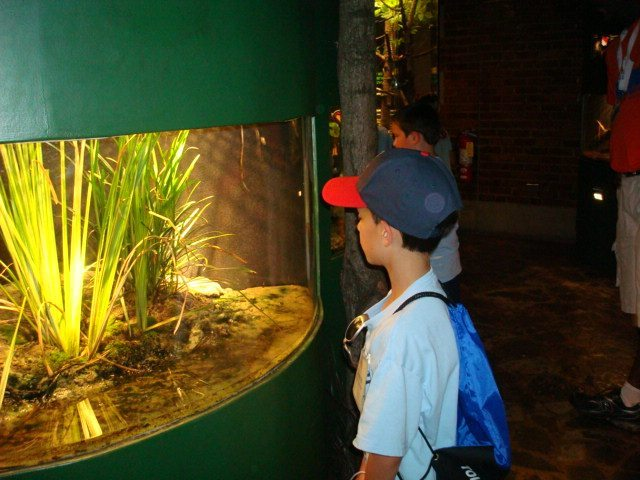 image of kids viewing an exhibit