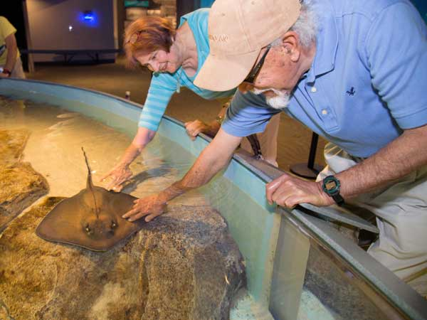 Image of seniors touching a sting ray at the Aquarium