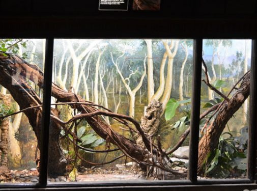 A sample of one of Woody LaPlante's murals inside the cobra exhibit at the Zoo's Reptile House