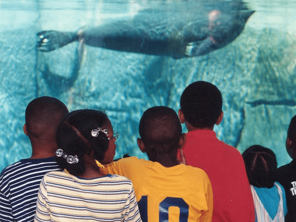 Image of school children watching a seal underwater