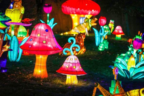 Chinese lanterns in the shape of mushrooms, frogs, alligators, and insects