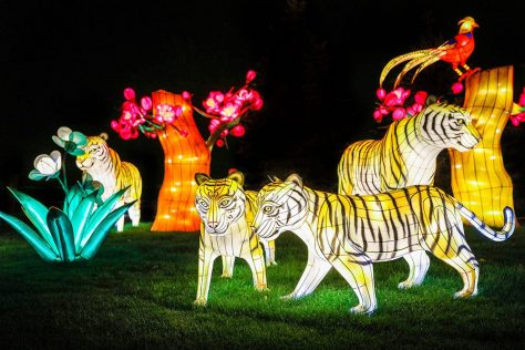 chinese lanterns in the shape of tigers, trees, flowers, and birds