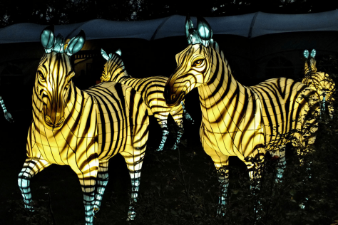 chinese lanterns in the shape of zebras