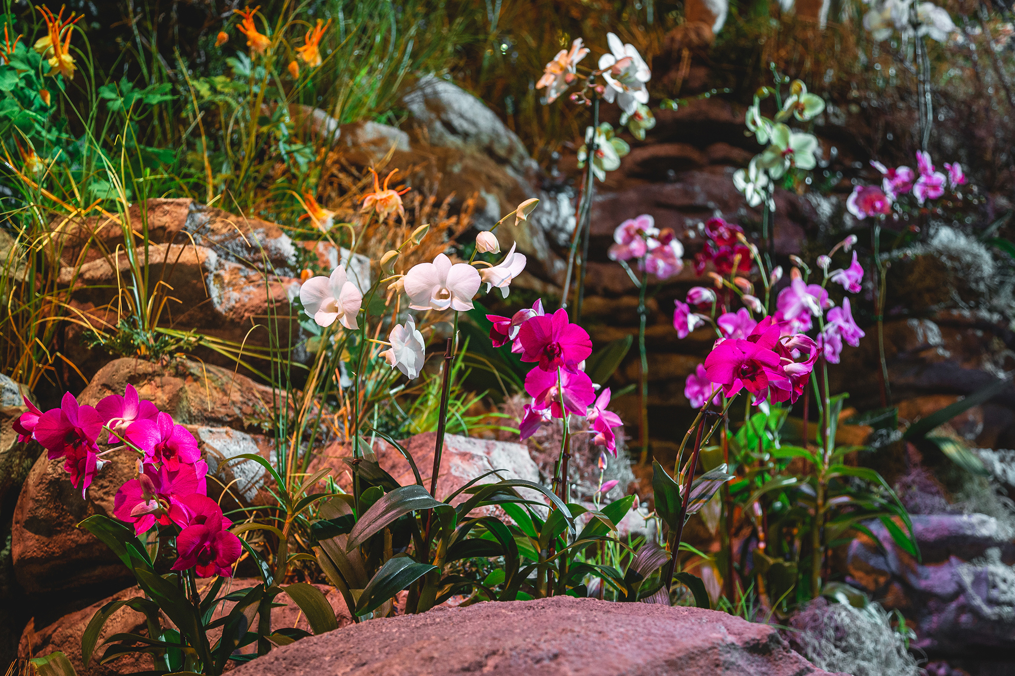 <h1>Orchid Show</h1>